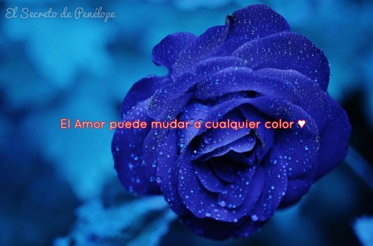 Rosa azul ♥